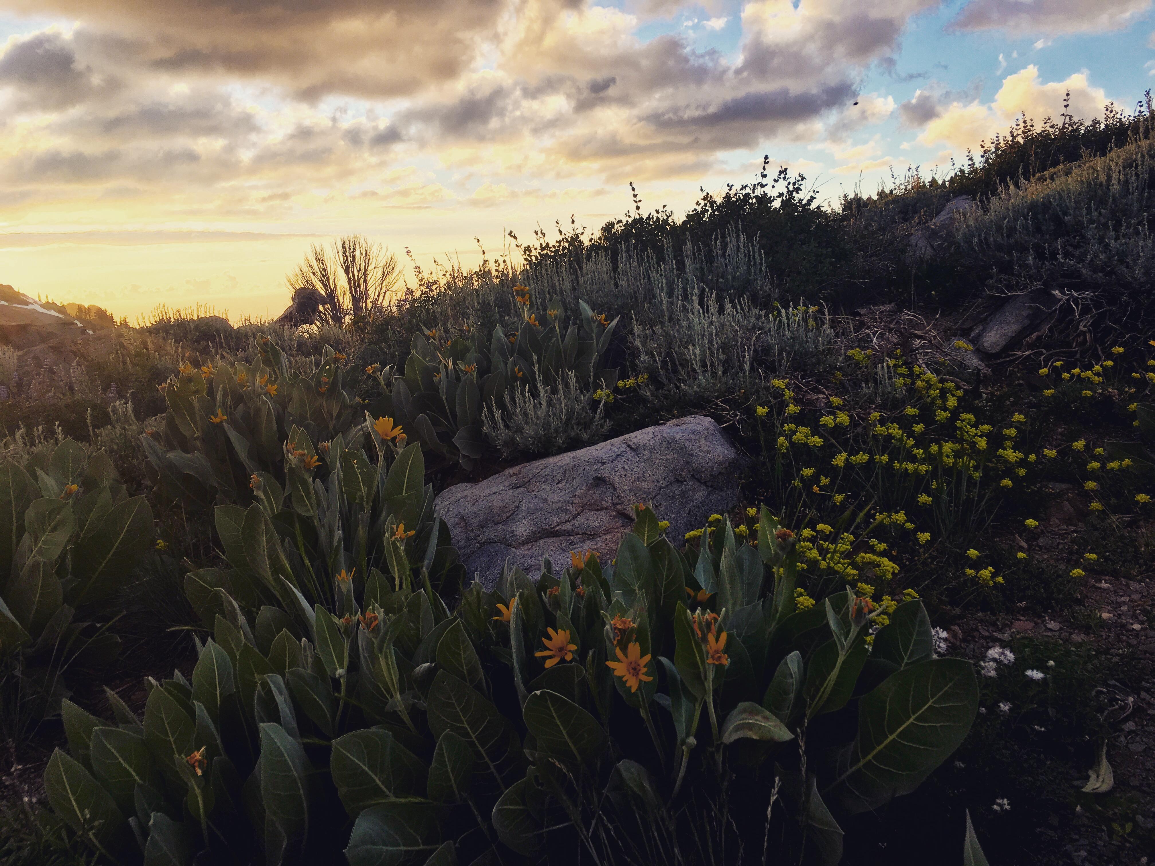 Astonishing wildflower varieties in Lake Tahoe