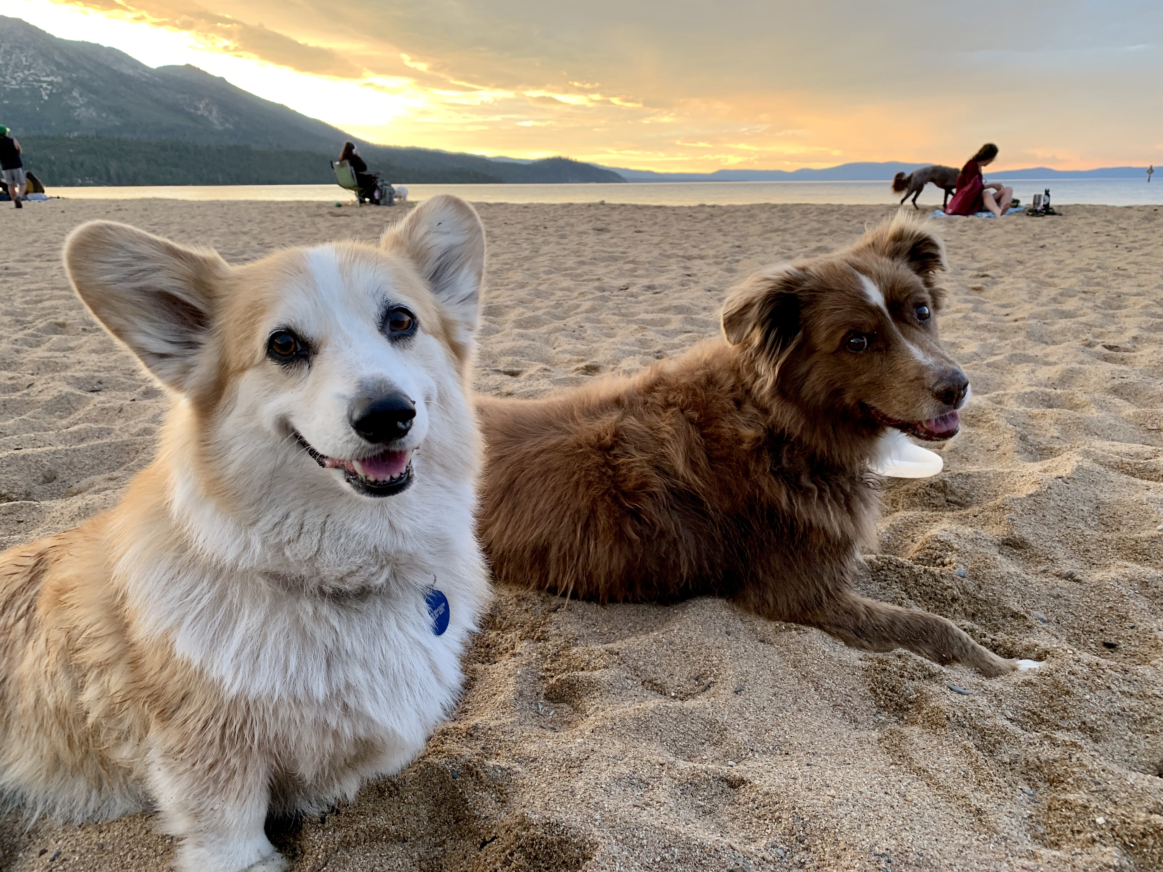 Bring the pup for sunset at dog-friendly Nevada Beach